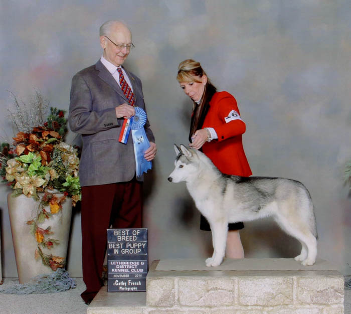 Margie Leopold Winner at Lethbridge Dog Show
